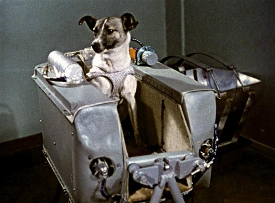 Se cumplen 56 años del lanzamiento de Laika al espacio